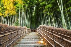 Δασική πορεία μπαμπού Arashiyama, Κιότο Στοκ φωτογραφίες με δικαίωμα ελεύθερης χρήσης