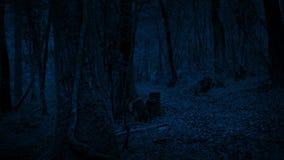 Δασική πορεία που κινεί τη νύχτα τον πυροβολισμό φιλμ μικρού μήκους