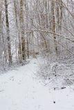 Δασική πορεία στο χειμώνα Στοκ εικόνες με δικαίωμα ελεύθερης χρήσης