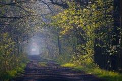 Δασική πορεία την άνοιξη Στοκ Εικόνα