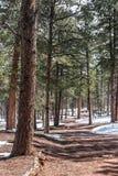 Δασική πορεία το χειμώνα Στοκ εικόνες με δικαίωμα ελεύθερης χρήσης