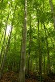 δασική πράσινη άνοιξη Στοκ Φωτογραφία