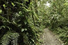 δασική πράσινη βροχή ζουγ&ka στοκ εικόνα με δικαίωμα ελεύθερης χρήσης