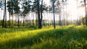Δασική πράσινη χλόη ήλιων απόθεμα βίντεο