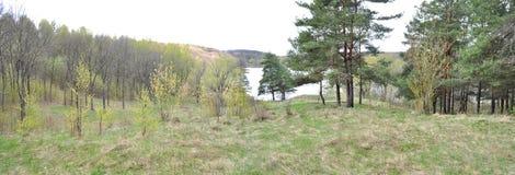 Δασική, πρόωρη φύση άνοιξη Στοκ Φωτογραφίες