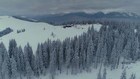 Δασική πτήση κηφήνων πεύκων χειμερινού χιονιού στα βουνά απόθεμα βίντεο