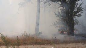 Δασική πυρκαγιά, καπνός, μμένα δέντρα, βλάστηση και έδαφος Καπνός στροβίλων αέρα φιλμ μικρού μήκους