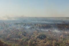 Δασική πυρκαγιά Μμένα δέντρα μετά από την πυρκαγιά, ρύπανση στοκ φωτογραφία με δικαίωμα ελεύθερης χρήσης