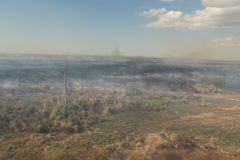 Δασική πυρκαγιά Μμένα δέντρα μετά από την πυρκαγιά, ρύπανση στοκ εικόνα