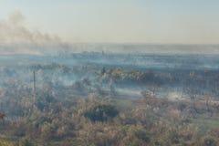 Δασική πυρκαγιά Μμένα δέντρα μετά από την πυρκαγιά, ρύπανση στοκ εικόνα με δικαίωμα ελεύθερης χρήσης