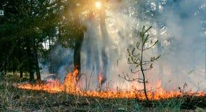 Δασική πυρκαγιά Μμένα δέντρα μετά από την πυρκαγιά, τη ρύπανση και πολύ καπνό στοκ εικόνες