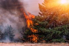Δασική πυρκαγιά Μμένα δέντρα μετά από τις δασικές πυρκαγιές και τα μέρη του καπνού στοκ φωτογραφίες με δικαίωμα ελεύθερης χρήσης