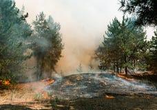 Δασική πυρκαγιά Μμένα δέντρα μετά από τις δασικές πυρκαγιές και τα μέρη του καπνού στοκ εικόνα με δικαίωμα ελεύθερης χρήσης