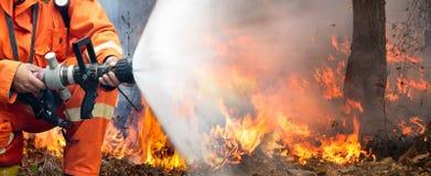 Δασική πυρκαγιά στην Ταϊλάνδη στοκ εικόνες