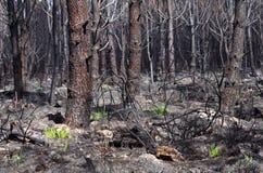 Δασική πυρκαγιά Στοκ εικόνα με δικαίωμα ελεύθερης χρήσης
