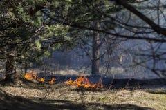 Δασική πυρκαγιά Στοκ Φωτογραφίες