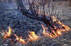 Δασική πυρκαγιά Στοκ Εικόνα