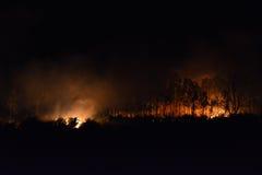 Δασική πυρκαγιά Στοκ Εικόνες