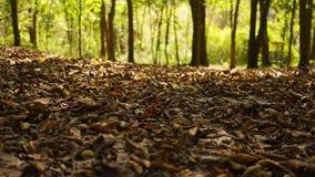 Δασική σειρά πτώσης - η κάμερα γλιστρά πέρα από το έδαφος ενός δασικού πατώματος πτώσης που καλύπτεται στα καφετιά φύλλα απόθεμα βίντεο