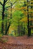 δασική σκηνή πτώσης χρωμάτων φθινοπώρου δονούμενη Στοκ Φωτογραφία
