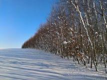 Δασική σκιά χιονιού σημύδων στοκ φωτογραφίες