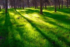 δασική σκιά Στοκ φωτογραφίες με δικαίωμα ελεύθερης χρήσης