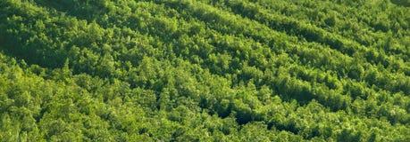 Δασική σύσταση βουνών Στοκ Φωτογραφίες
