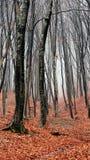 Δασική ταπετσαρία φθινοπώρου Στοκ Φωτογραφία