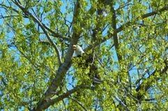 Δασική υποχώρηση ανοίξεων αετών Στοκ εικόνες με δικαίωμα ελεύθερης χρήσης