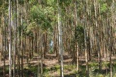 Δασική φυτεία δέντρων στοκ φωτογραφία