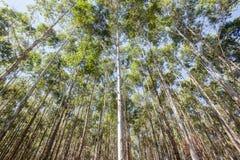 Δασική φυτεία δέντρων στοκ εικόνες