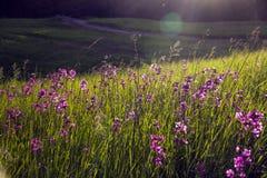 Δασική φύση ομορφιάς Στοκ Εικόνες