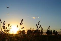 Δασική φύση πικ-νίκ calmness ηρεμίας πρασινάδων σύννεφων τοπίων στροφίγγων τομέων πόλεων ηλιοβασιλέματος ουρανού χλόης Στοκ φωτογραφίες με δικαίωμα ελεύθερης χρήσης