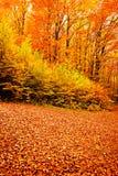 δασική φύση πτώσης φθινοπώρ&om στοκ εικόνα με δικαίωμα ελεύθερης χρήσης