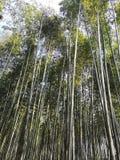 Δασική φύση του Κιότο Ιαπωνία μπαμπού στοκ εικόνες