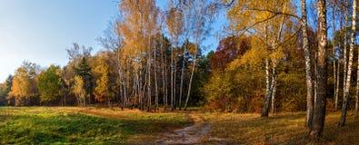 Δασική φύση φθινοπώρου στοκ φωτογραφίες με δικαίωμα ελεύθερης χρήσης