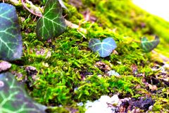 Δασική φύση Στοκ εικόνα με δικαίωμα ελεύθερης χρήσης