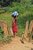 δασικοί άνθρωποι της Ινδίας Στοκ εικόνες με δικαίωμα ελεύθερης χρήσης