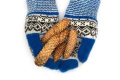 Δασικοί κώνοι στα γάντια σε ένα άσπρο υπόβαθρο στοκ εικόνες
