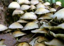 Δασικοί μύκητες Στοκ Φωτογραφίες