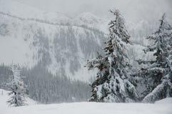 Δασικοί λόφοι στη Βρετανική Κολομβία Στοκ Εικόνα