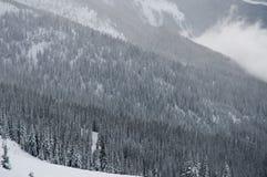 Δασικοί λόφοι στη Βρετανική Κολομβία Στοκ εικόνες με δικαίωμα ελεύθερης χρήσης