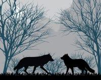 Δασικοί λύκοι Στοκ φωτογραφία με δικαίωμα ελεύθερης χρήσης