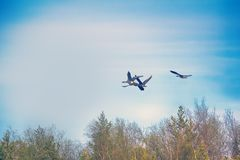 Δασικός-αναπαράγοντας χωραφόχηνα - κοπάδι πέρα από το δάσος Στοκ Εικόνες