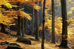 δασικός βράχος οξιών Στοκ Φωτογραφία