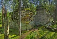 δασικός βράχος Στοκ Εικόνες