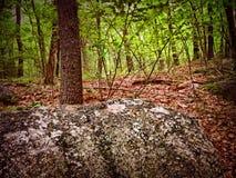 Δασικός βράχος Στοκ Φωτογραφία