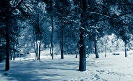 δασικός γραφικός χειμώνα&si στοκ εικόνες