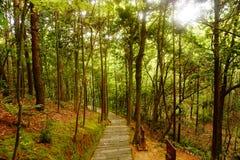 Δασικός δρόμος βουνών πολύτιμων λίθων, Hangzhou στοκ φωτογραφίες