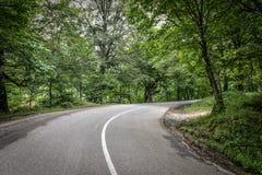 Δασικός δρόμος για ένα αυτοκίνητο και κανένα αυτοκίνητο Στοκ φωτογραφία με δικαίωμα ελεύθερης χρήσης